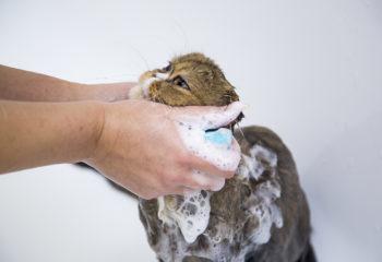 помыть кота)